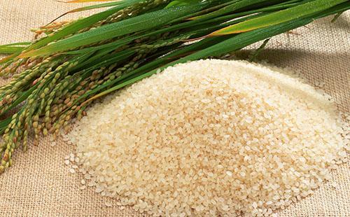 Как варить рисовую кашу на молоке 🥝 как приготовить вкусную кашу правильно, пропорции