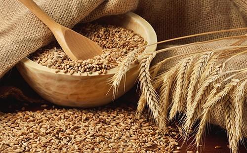 Пшеничное зерно - сила природы, прошедшая через века