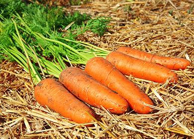 Морковь лежит на соломе