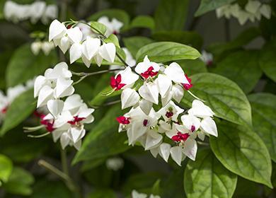 Тропические соцветия крупным планом