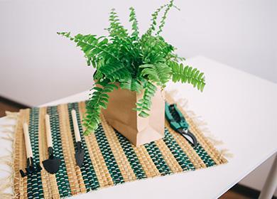 Растение нефролепис в пакете