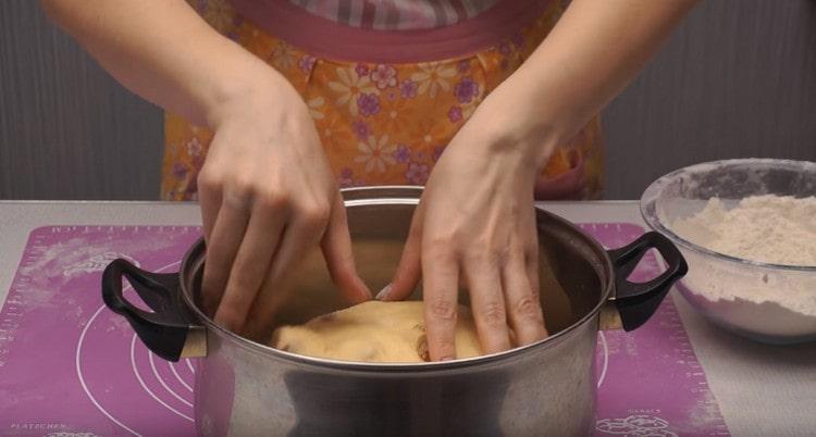 Выкладываем тесто в присыпанную мукой большую кастрюлю или миску.