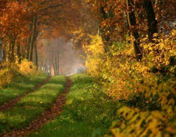 Пословицы про осень: 50 поговорок со смыслом ✍