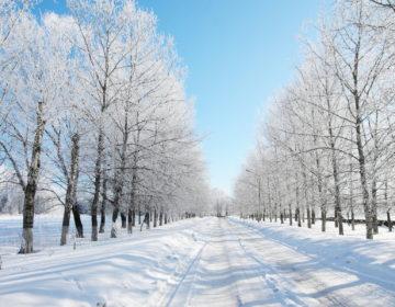 Пословицы о зиме: 50 поговорок со смыслом ✍