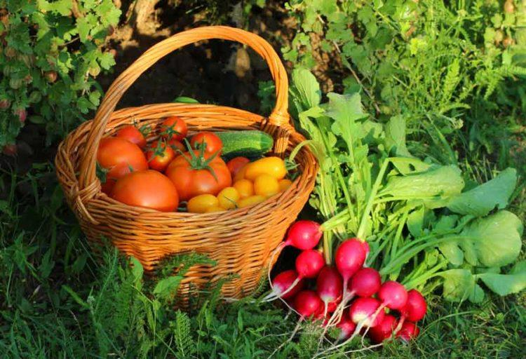 Стихи про огород для детей короткие
