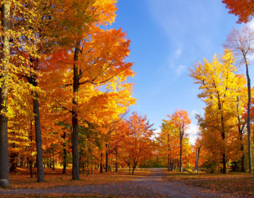 Стихи про осень: 50 красивых стихотворений со смыслом ✍