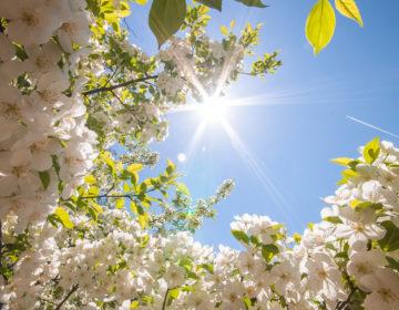 Стихи о весне: 50 красивых стихотворений со смыслом ✍