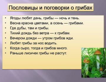 Пословицы о грибах 🥝 50 самых известных поговорок