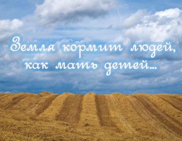 Пословицы про землю русскую 🥝 50 самых известных поговорок