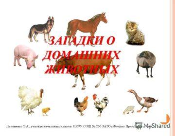 Загадки о домашних животных 🥝 40 самых лучших головоломок на русском