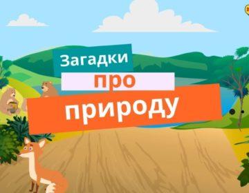 Загадки про природу 🥝 40 самых лучших головоломок на русском