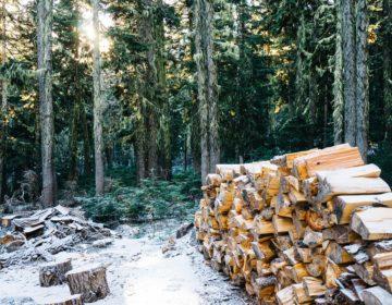 Пословицы про лес 🥝 50 самых известных поговорок