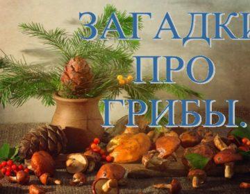 Загадки о грибах 🥝 40 самых лучших головоломок на русском