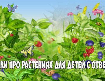 Загадки про растения 🥝 40 самых лучших головоломок на русском