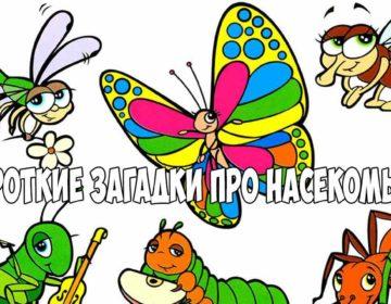 Загадки про насекомых 🥝 40 самых лучших головоломок на русском